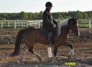VANIS2
